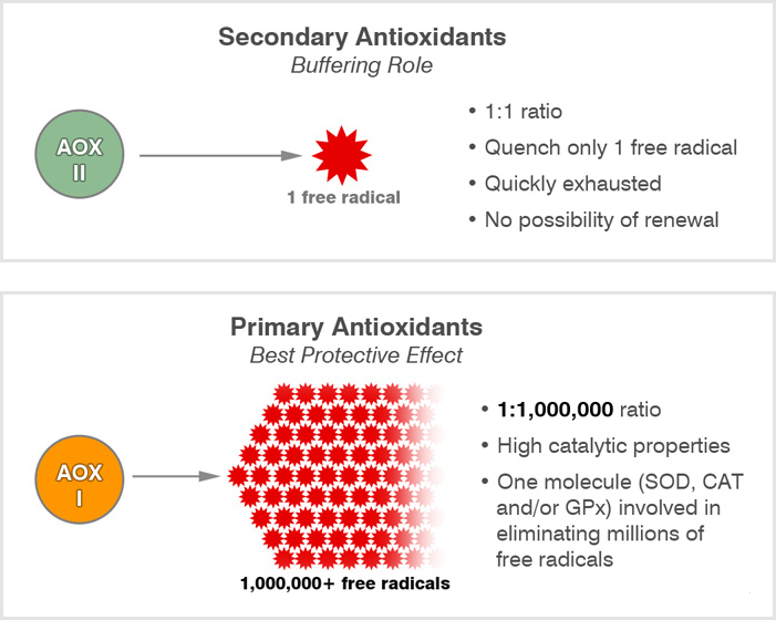 primary and secondary antioxidants