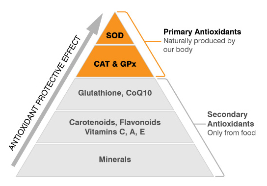 primary antioxidants