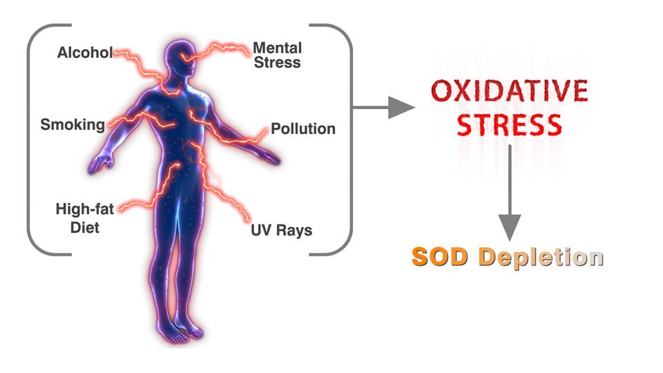 SOD Environmental Factors