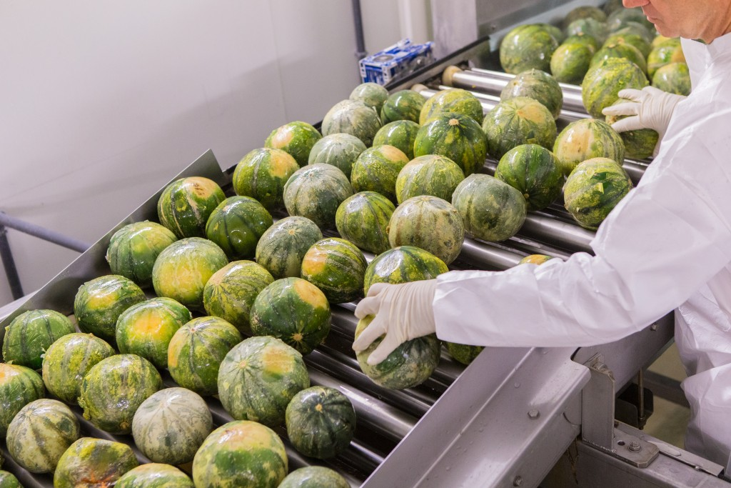 melon selection
