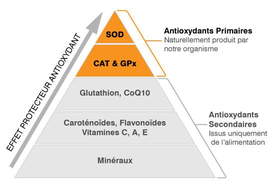 antioxydants primaires